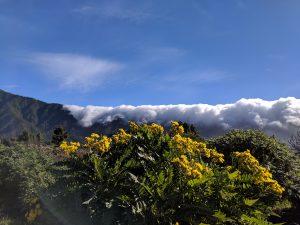 La Palma, Kanarian saarten vihreä helmi